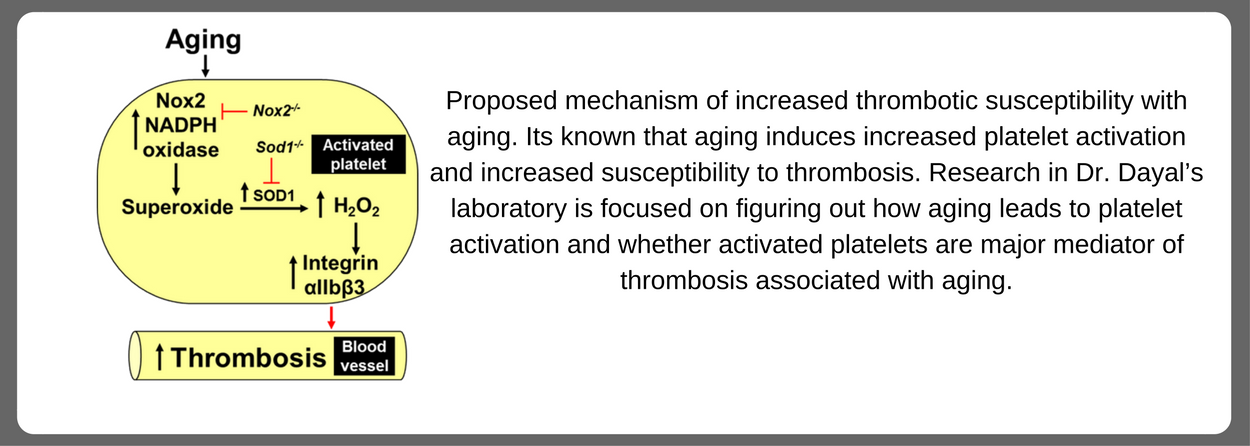 Dayal Model for Aging and Thrombosis